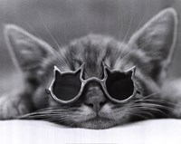 Cool Cat I Fine-Art Print