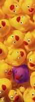 Quack Quack II Fine-Art Print