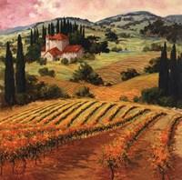 Dawn of a Tuscan Vineyard Fine-Art Print