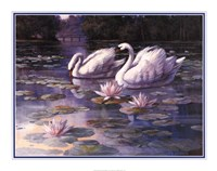 Swans and Bridge Fine-Art Print