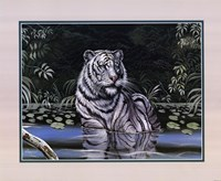 Wading White Tiger Fine-Art Print