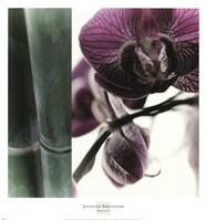 Bamboo I (Flower I) Fine-Art Print