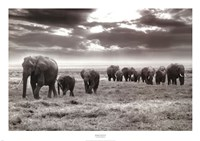 Amboseli Elephants Fine-Art Print