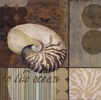 Contemporary Shell II Fine-Art Print