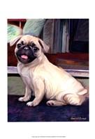 Baby Pug Fine-Art Print