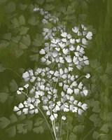 Jewel Ferns III Fine-Art Print