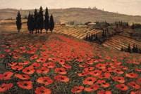 Hills Of Tuscany I Fine-Art Print