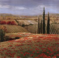 Tuscan Cypress II Fine-Art Print
