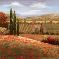 Tuscan Cypress I Fine-Art Print