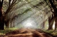 Evergreen Plantation Fine-Art Print