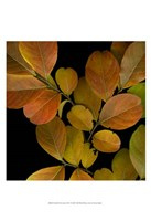 Small Vivid Leaves I Fine-Art Print