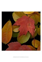 Small Vivid Leaves III Fine-Art Print