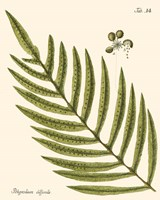 Small Antique Fern I Fine-Art Print