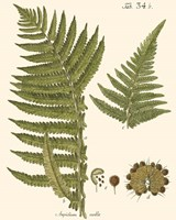 Small Antique Fern III Fine-Art Print