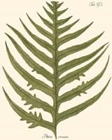 Small Antique Fern VIII Fine-Art Print