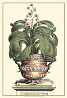 Antique Munting Aloe II Fine-Art Print