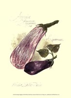 Aubergine Eggplant Fine-Art Print