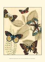 Sm. Graphic Butterflies I (P) Fine-Art Print