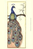 Small Rebecca's Peacock I (P) Fine-Art Print