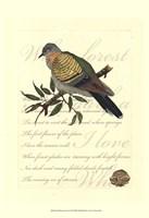 Small Romantic Dove I Fine-Art Print