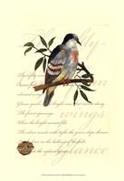 Small Romantic Dove II Fine-Art Print