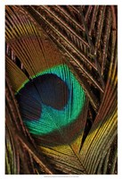 Peacock Feathers II Fine-Art Print