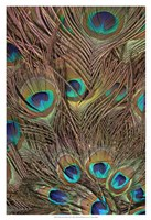 Peacock Feathers III Fine-Art Print