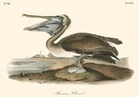 Brown Pelican Fine-Art Print