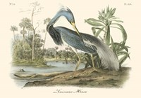 Louisiana Heron Fine-Art Print