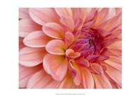 Graphic Dahlia II Fine-Art Print