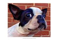 Boston Puppy Fine-Art Print