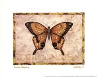Butterfly VI Fine-Art Print