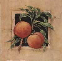 Peach Square Fine-Art Print