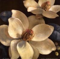 Blooming Magnolias I Fine-Art Print