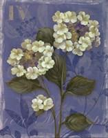 Lace Hydrangea - mini Fine-Art Print