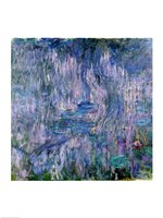 Waterlilies and Reflections of a Willow Tree Fine-Art Print
