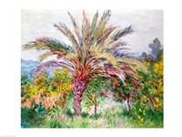 Palm Tree at Bordighera Fine-Art Print