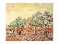 The Olive Grove, 1889 Fine-Art Print