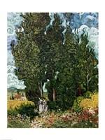 The Cypresses Fine-Art Print