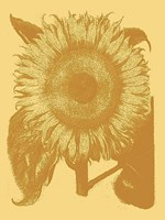 Sunflower 19 Fine-Art Print
