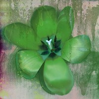 Tulip Fresco (green) Fine-Art Print