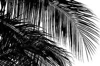 Palms 3 Fine-Art Print