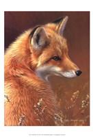 Curious- Red Fox Fine-Art Print