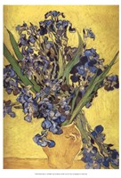 Irises in Vase Fine-Art Print