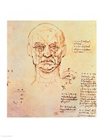 Studies of the Proportions of the Face and Eye Fine-Art Print