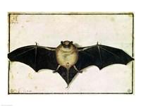 Bat, 1522 Fine-Art Print