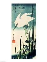 White Heron and Iris Fine-Art Print