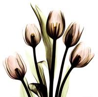 Crystal Flowers X-Ray, Tulip Bouquet Fine-Art Print