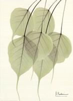Cascading Bo Tree Fine-Art Print