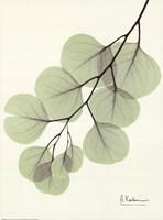 Cascading Eucalyptus Fine-Art Print
